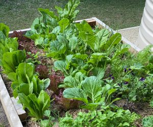 Green Leafy Vegetable Garden